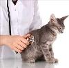 Ветеринарные клиники в Кардымово
